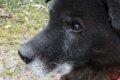 老犬の散歩で気をつ…の画像