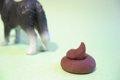 愛犬のうんちチェッ…の画像