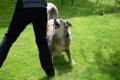 犬が人の周りをぐる…の画像
