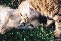 犬の血液は猫にも輸…の画像
