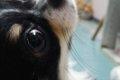 犬の肥満細胞腫は転…の画像