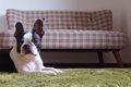 犬用カーペットおす…の画像