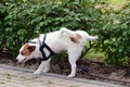 犬の前立腺がんにつ…の画像