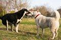 初対面の犬にやって…の画像