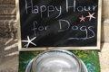 愛犬がよく水を飲む…の画像