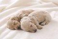 愛犬の妊娠期間の過…の画像
