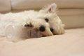 子犬のかじり癖の理…の画像