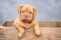 犬を飼う時は、良い…の画像