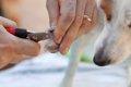犬の爪は長すぎても…の画像