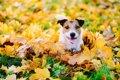 犬が干し柿を食べる…の画像