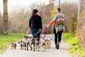 犬の散歩代行アルハ…の画像