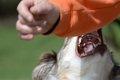 犬は突然凶暴化する…の画像