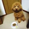 犬の腎臓病 予防と…の画像