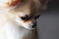 犬の糞が臭いと寿命…の画像