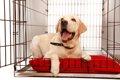 犬のおしゃれなケー…の画像