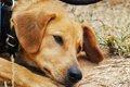 犬のストレス!飼い…の画像