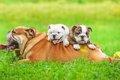 子犬とって父犬の役…の画像