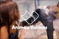 保護犬をこっそりペ…の画像