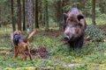 猪犬(ししいぬ)と…の画像