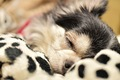 愛犬の『後追い行動…の画像