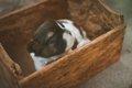 愛犬が狭い場所に隠…の画像