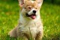愛犬にフロントライ…の画像