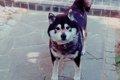 犬と暮らす  ~寄り…の画像