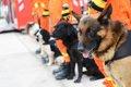 災害救助犬が靴を履…の画像