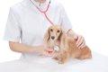 愛犬の定期検診にい…の画像