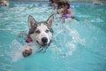犬にウォーターセラ…の画像