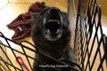 人を噛む犬を作るの…の画像