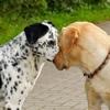 犬のストレスを理解…の画像