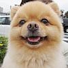 犬の健康維持に3つの…の画像