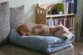 犬の椎間板ヘルニア …の画像