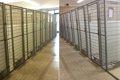 動物保護施設で起き…の画像