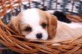 犬の名前はどう決め…の画像