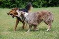 犬の突発的な攻撃行…の画像
