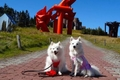 愛犬と一緒に楽しめ…の画像