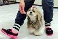 ドッグダンスで愛犬…の画像