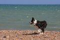 愛犬と海水浴へ行く…の画像