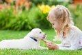 犬と触れ合える関東…の画像