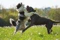 犬友同士でありがち…の画像