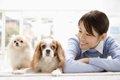 犬の愛情表現を、あ…の画像