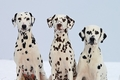 犬猫の多頭飼いの届…の画像