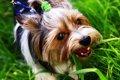 犬が散歩の時に草を…の画像