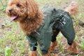 愛犬のレインコート…の画像