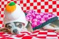 犬とのお正月で起き…の画像