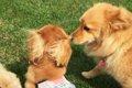 愛犬と野球観戦がで…の画像