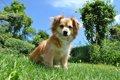 犬と桜を楽しもう!…の画像