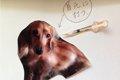 犬の糖尿病の症状・…の画像